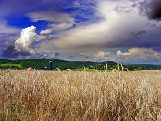 WheatField-NicolasT-Flickr