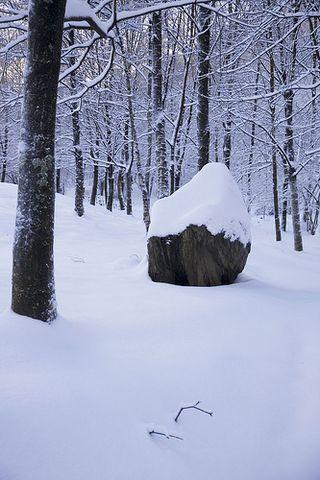 Snow_pic-thomaspetermueller