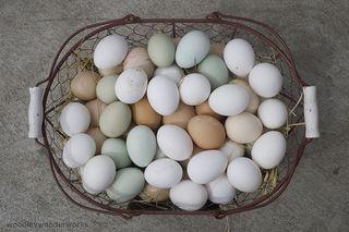 Eggs-woodleywonderworks-flickr